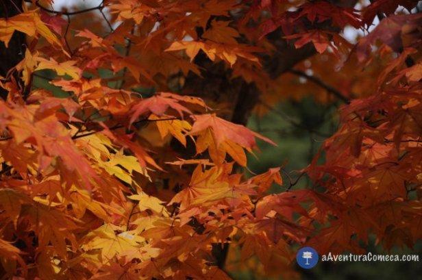outono fuji japao