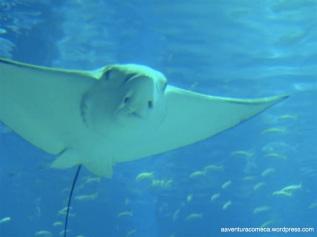 Aquario de Osaka (143)