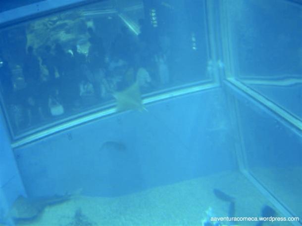 Aquario de Osaka (69)