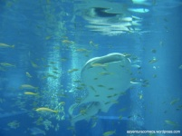 Aquario de Osaka (80)