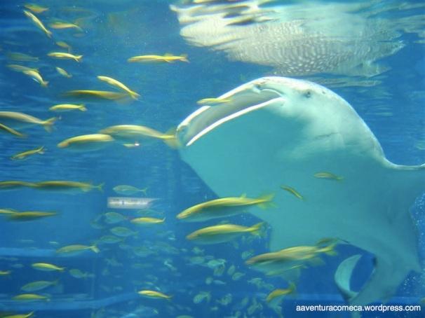 Aquario de Osaka (81)
