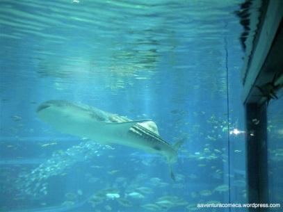 aquario de osaka
