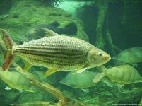 aqua totto gifu aquario-24