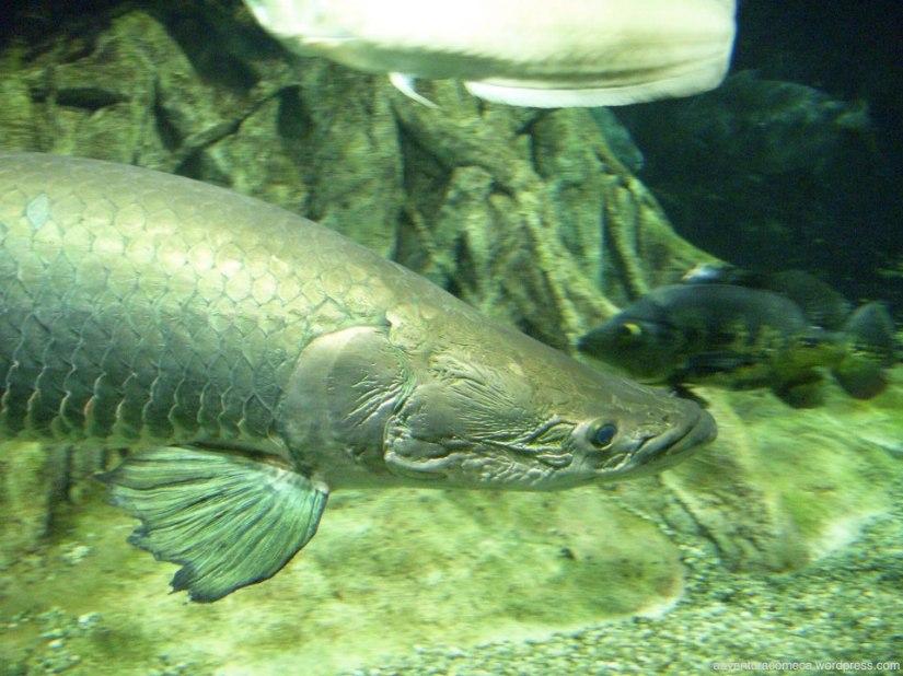 aqua totto gifu aquario-6