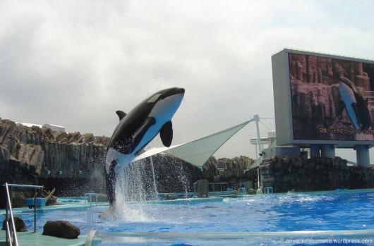 aquario de Nagoya