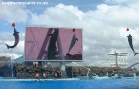aquario nagoya-4