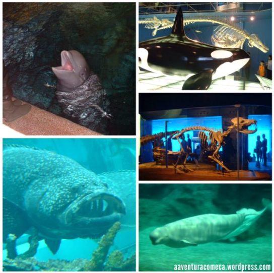aquario nagoya-5