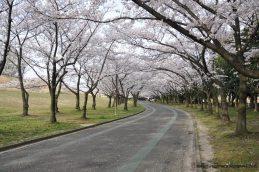 shonai park nagoya japao-22