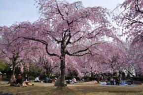 Sakura no Parque Shonai emNagoya
