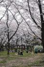 shonai park nagoya japao-7