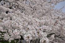 shonai park nagoya japao-9