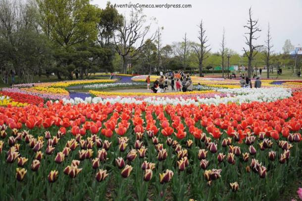 tulipas kiso sansen park japao