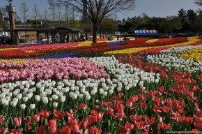 Tulipas no Parque Kiso Sansen emGifu