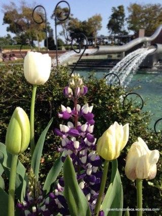 tulipas park kiso gifu japao-15