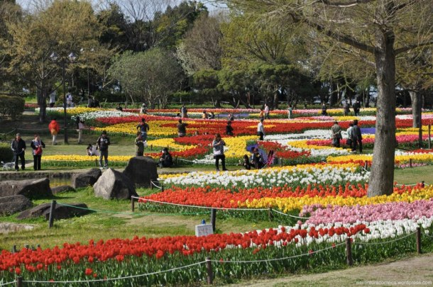 tulipas park kiso gifu japao-23