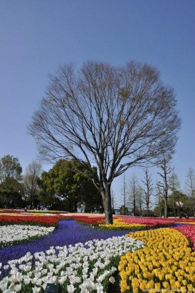 tulipas park kiso gifu japao-24