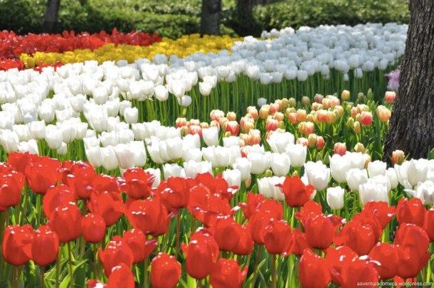 tulipas park kiso gifu japao-47