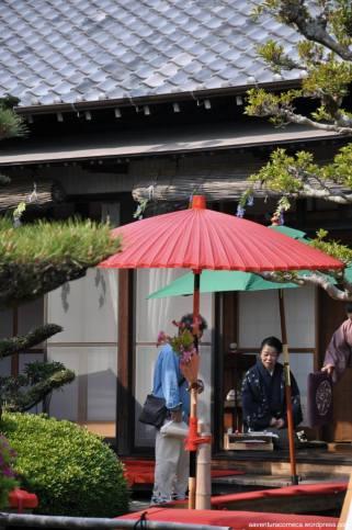 fuji flower festival konan glicinias mandaraji-1