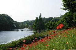 hana festa rosas kani japao-17