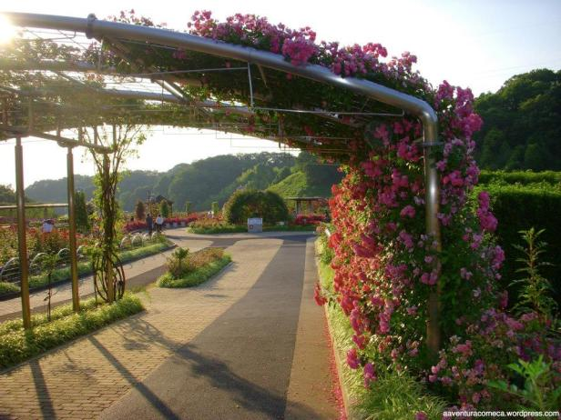 rosas hana festa kani japao-20