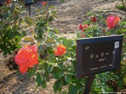 com o nome da flor e de que país é