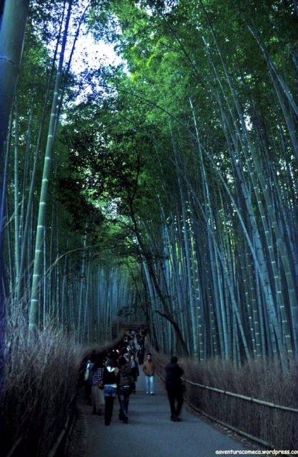 bambu arashiyama sagano japao