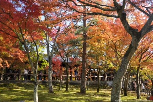 folhas de outono tofukuji kyoto japao