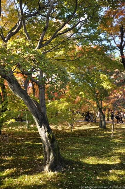 jardim outono tofukuji kyoto japao