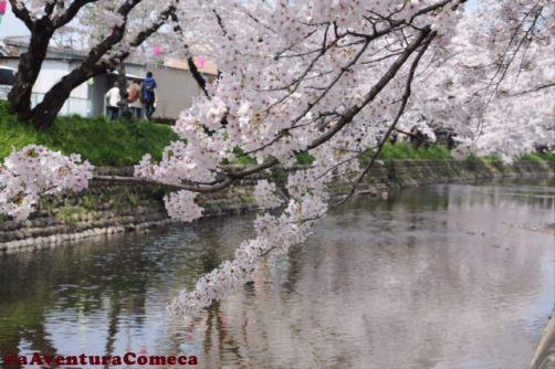 gojo rio iwakura