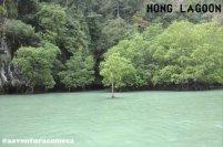 hong island verde