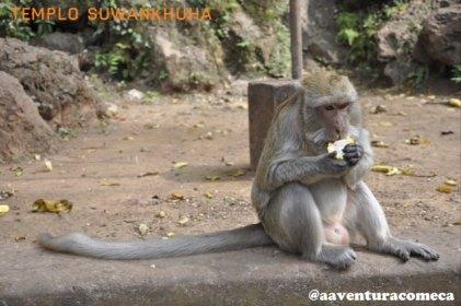 macaco templo Suwankhuha