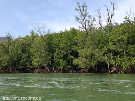 mangue Phang Nga Bay