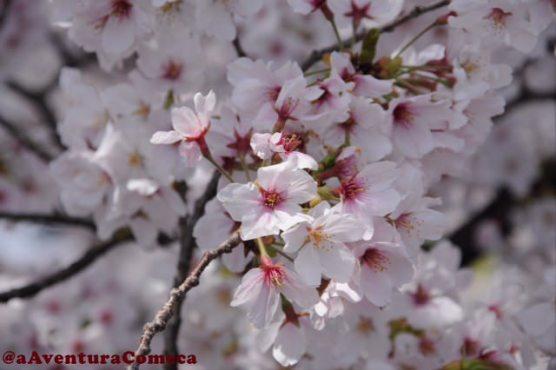 sakura rio gojo iwakura