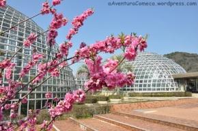 Sakura no Parque de FrutasTogokusan