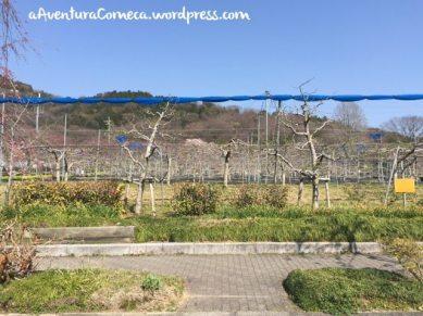 togokusan fruits park pomares
