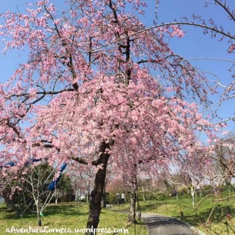 togokusan fruits park shidarezakura nagoya