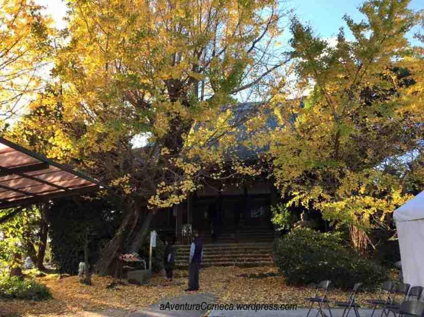 A árvore a esquerda tem aproximadamente 250 anos.