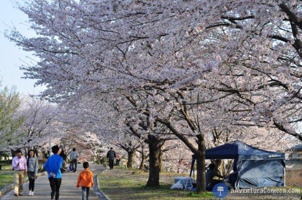 sakura japao parque ochiai hanami