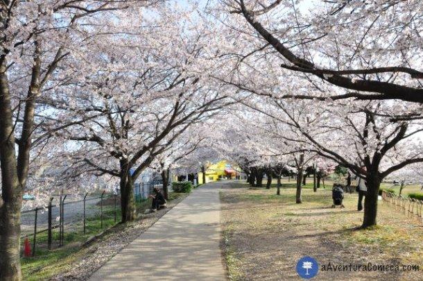 sakura japao parque ochiai tunel flores