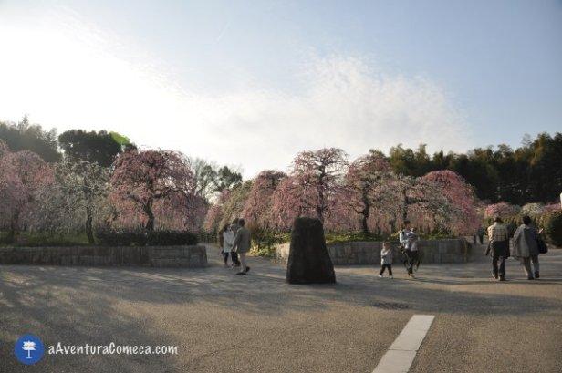 Shidare Ume Nagoya japao ameixeiras