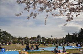 Hanami no ParqueTsuruma